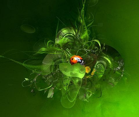 Harika Wallpaperlar - ladybug.ver.wallpaper by ~Feni-x