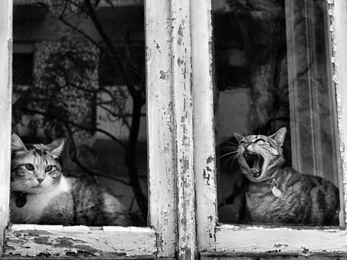 siyah beyaz fotoğraflar 60