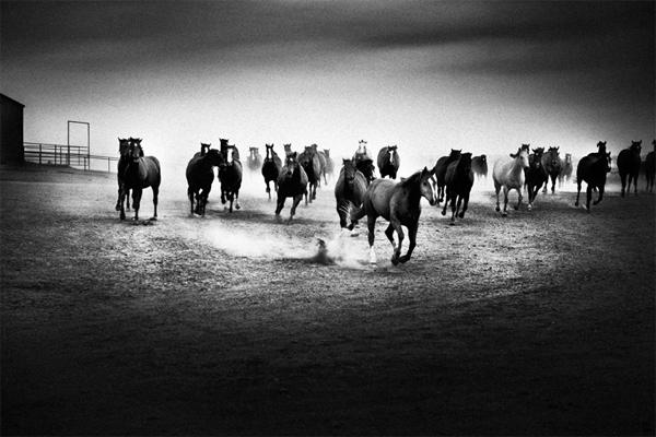 Peter Yang harika fotograflar