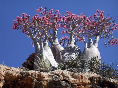 Dünyamızın En İlginç Ağaçları