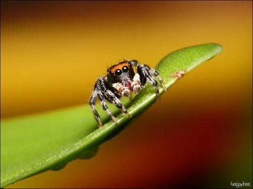 Örümcek 4