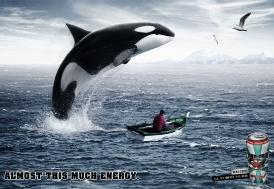 Mad Croc Whale