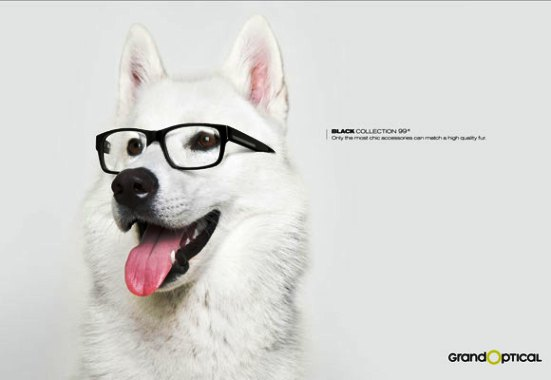 Nearsightedness Dog
