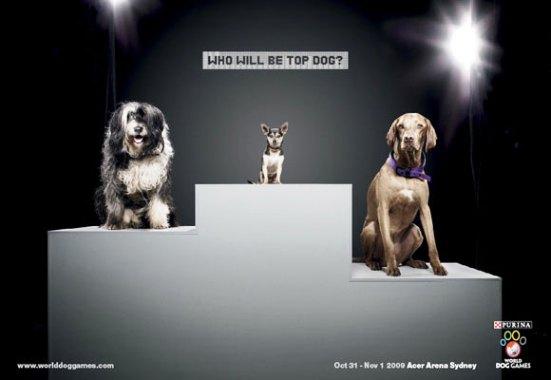 Podium of Dogs