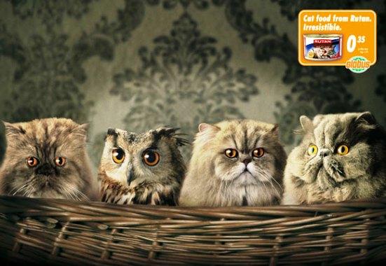 Wannabe Owl