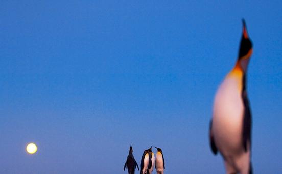 National Geographic 2009 en iyi fotoğraflar