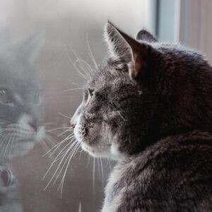 The Kedi