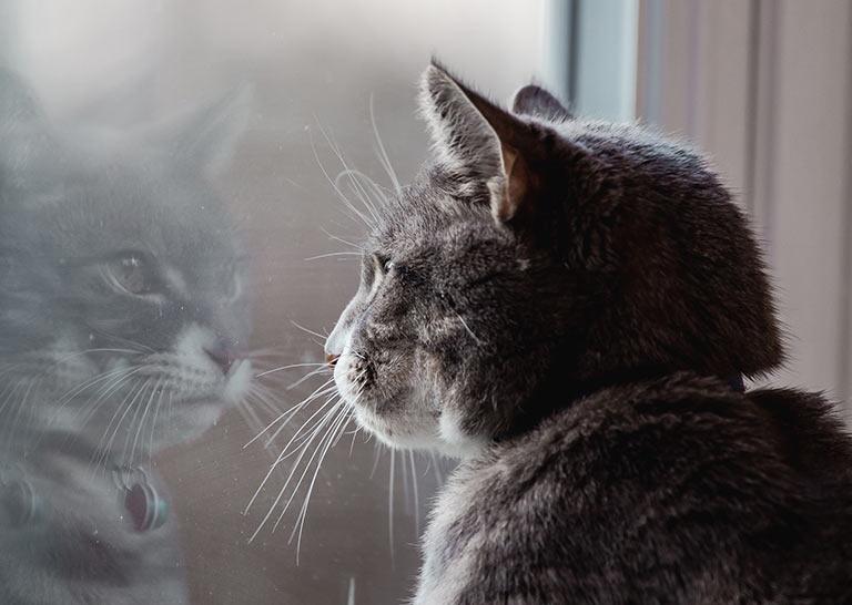 Kedi ve Köpek görsel API